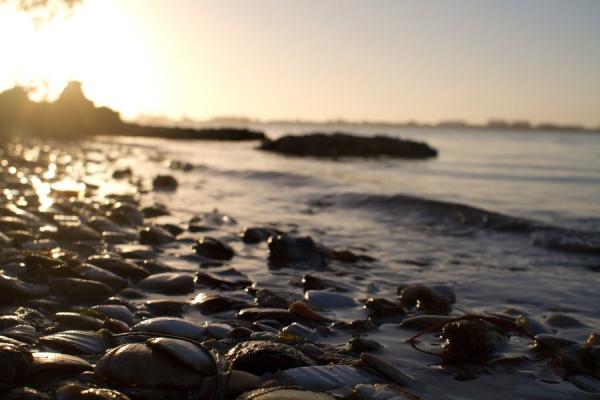 Мир в Фотографии - World In Photo 971 (100 фото)