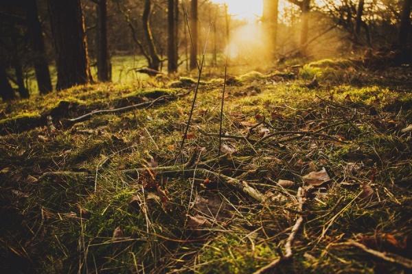 Мир в Фотографии - World In Photo 979 (100 фото)