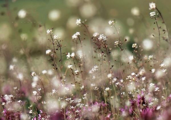 Мир в Фотографии - World In Photo 981 (100 фото)
