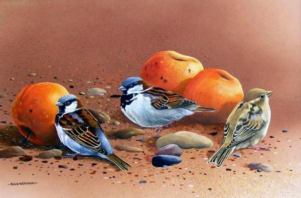Работы художника Ruud Weenink (52 фото)