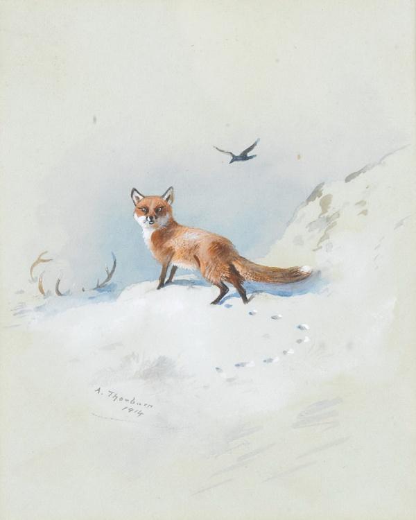 Британский анималист Арчибальд Торбёрн (171 фото)