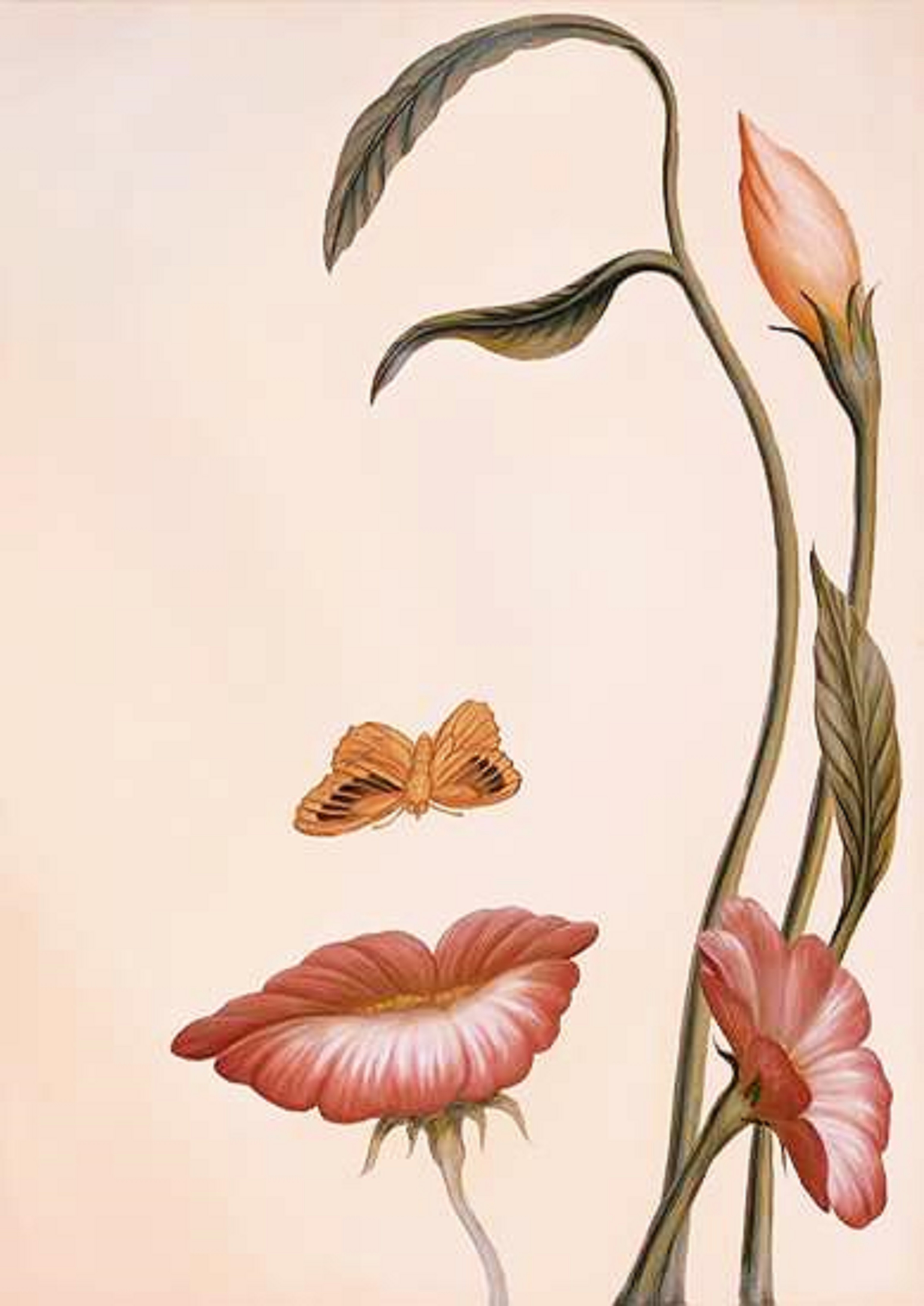 Цветы в виде гениталий 17 фотография