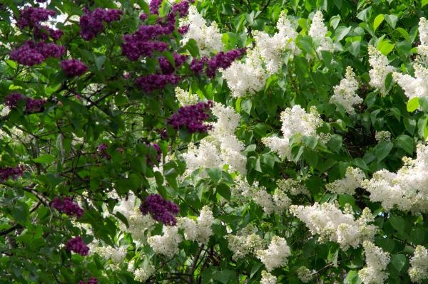 Национальный ботанический сад им. Н. Н. Гришко НАН Украины (21 фото)