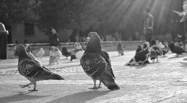 Фотоподборка - Чёрное и Белое / Black & White (389 фото)