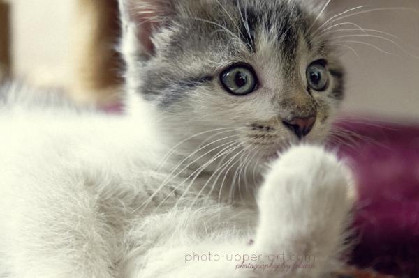 Benita Felidae (Germany) (70 фото)