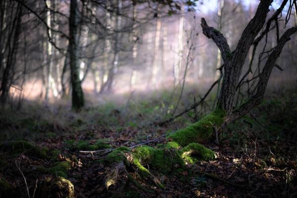 «Flickr» (фотосток) 2 (10 фото)
