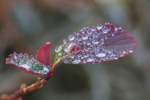 «Flickr» (фотосток) 5 (20 фото)