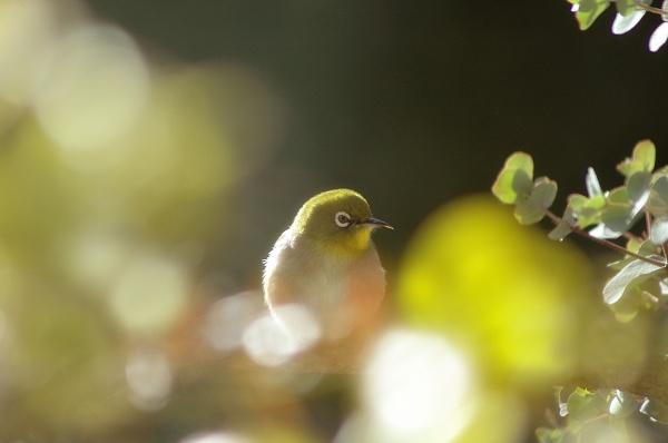 «Flickr» (фотосток) 6 (32 фото)