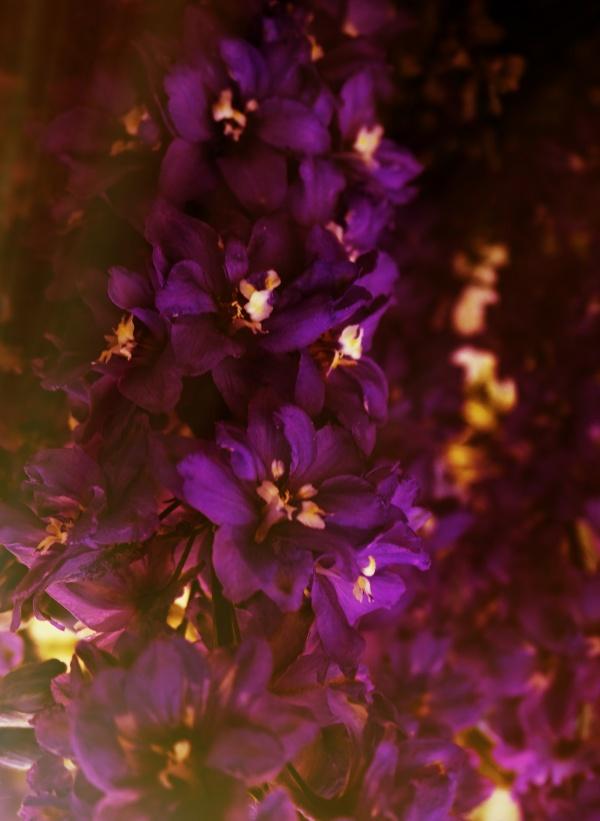 Garden flowers (26 фото)