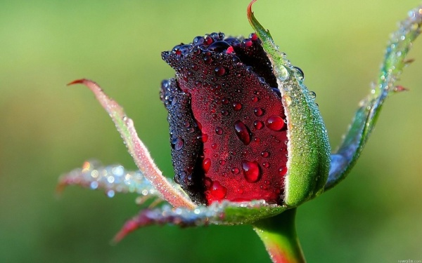 Roses & Water (51 фото)